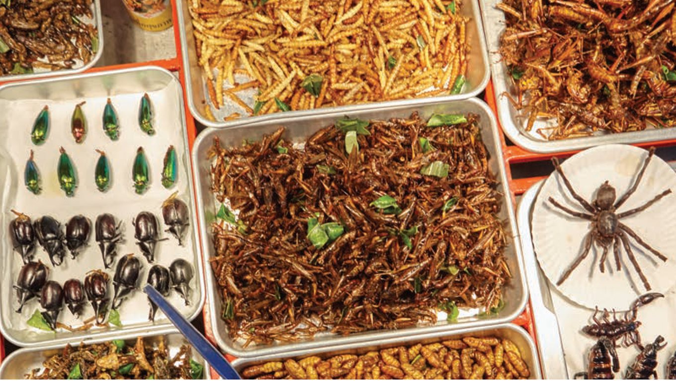 Should insects be on the menu?